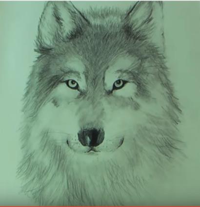 Zeichnung Wolf 2