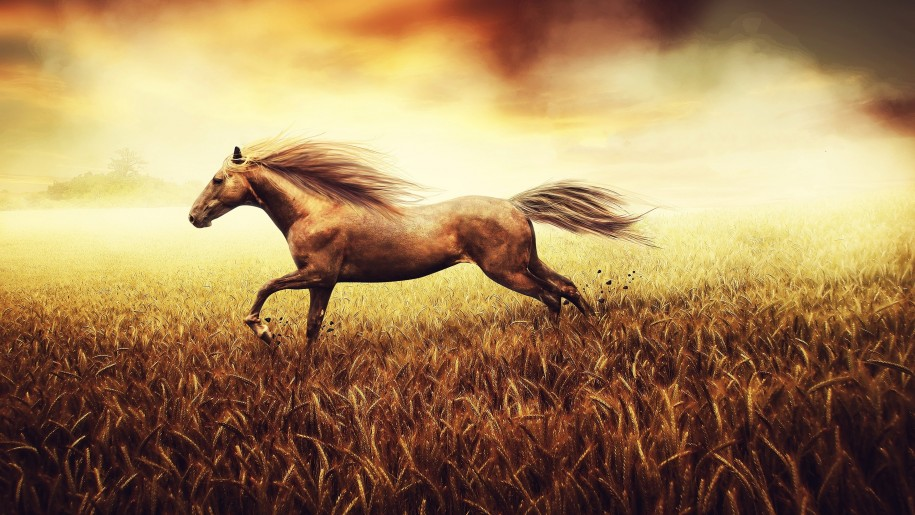 The-freedom-of-the-spirit-drawing-field-tail-wheat-horse-background-915x515